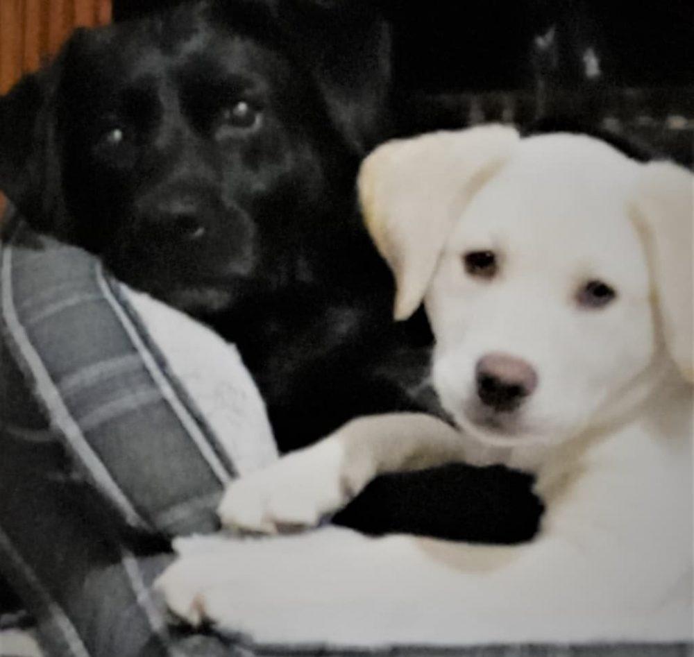 Finley&Harper